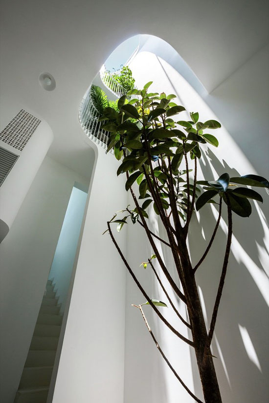 Cây xanh được trồng ở khắp mọi nơi.