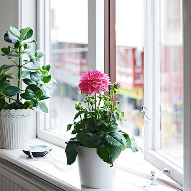 Cỏ cây hoa lá là một giải pháp tối ưu để mang đến sự dịu nhẹ trong tâm hồn