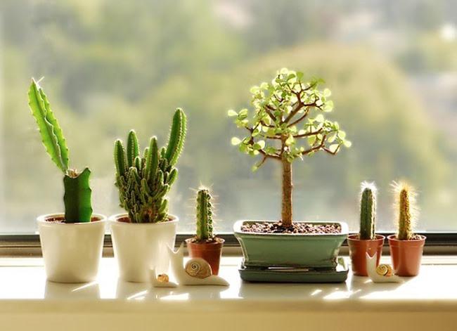 bố trí một vài chậu cây cảnh nhỏ cũng làm cho không gian trở nên tươi mát hơn